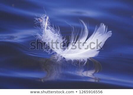 Перу · отражение · белый · свет · синий · макроса - Сток-фото © thomaseder