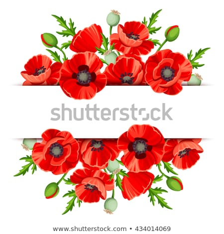 Rood poppy bloem peul bloeien Stockfoto © stocker