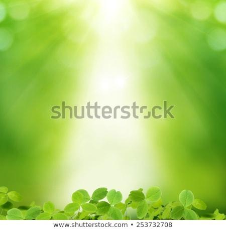 聖パトリックの日 緑 クローバー 日光 文字 縞模様の ストックフォト © marinini