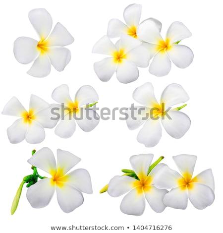 Fehér virág természet fürdő ázsiai ünnep Stock fotó © tungphoto