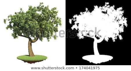 Green Tree with Detail Raster Mask. Stock photo © tashatuvango