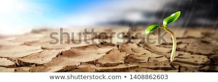 Leven hoop groeien schaduw kind aanraken Stockfoto © Lightsource
