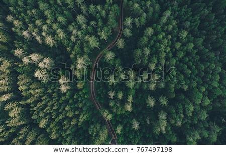 fenséges · ősz · tájkép · fák · napos · hegy - stock fotó © capturelight