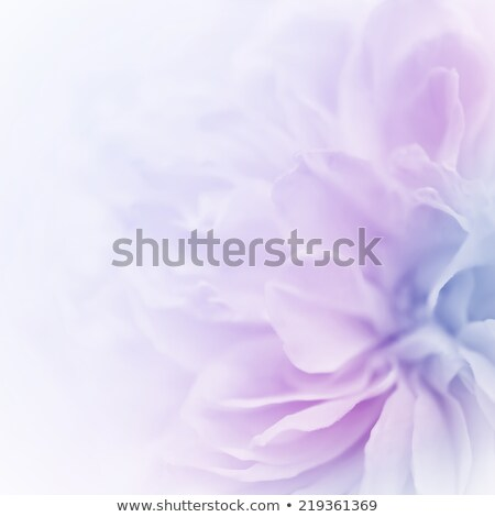 花 紫色 フローラル デザイン ベクトル 春 ストックフォト © almoni