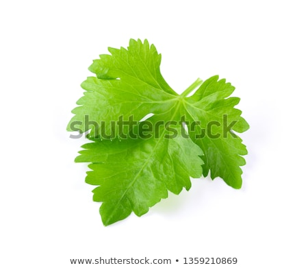 Organique céleri laisse salade usine blanche Photo stock © art9858