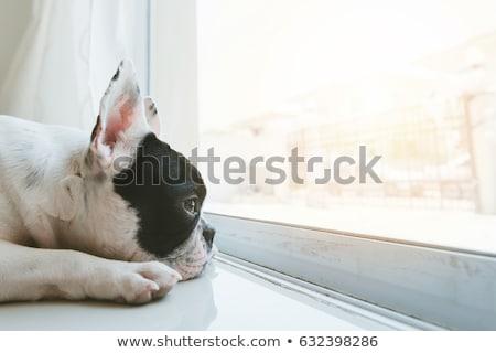 訓練 · 服従 · 男 · 犬の訓練 · 犬 · 友達 - ストックフォト © lightsource