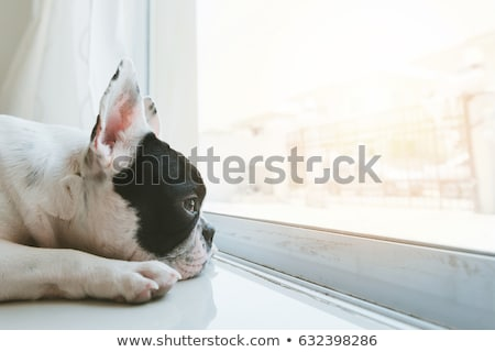 Stok fotoğraf: Pet Psychology