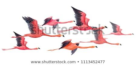 Uçan Kuşlar Suluboya Boyama Kâğıt Arka Plan Stok