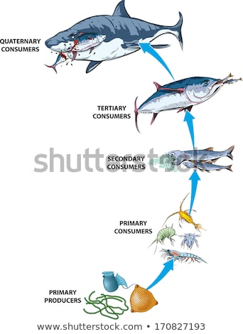 Sardine. Marine Food Fish Stock photo © ConceptCafe