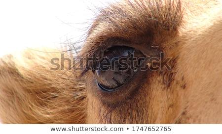 Portré teve közelkép zöld természet haj Stock fotó © OleksandrO