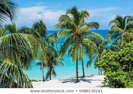 Praia tropical Cuba maravilhoso cristal água luz do sol Foto stock © Klinker