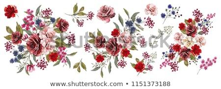 Dal çiçekler ağaç yeşil yaprakları beyaz çiçekler Stok fotoğraf © cosma