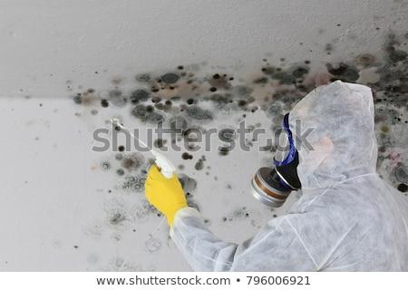Mold Stock photo © racoolstudio