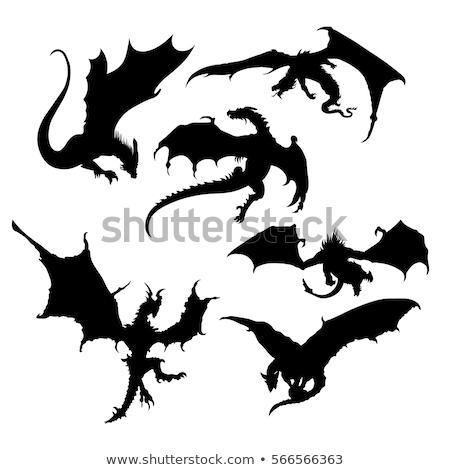 dragon vector silhouette Stock photo © Andrei_