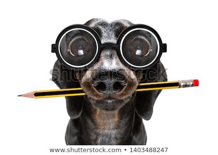 Banquero gafas maletín sonrisa hombre empresario Foto stock © NikoDzhi