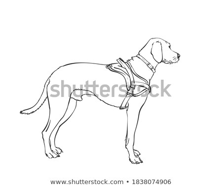 Dog stands sideways. Black silhouette isolated Stock photo © orensila