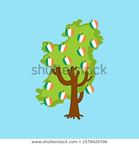 Vatansever elma ağacı İrlanda harita elma İrlandalı Stok fotoğraf © popaukropa