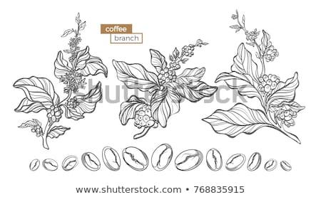 kávé · fa · sziluett · fény · barna · háló - stock fotó © frescomovie