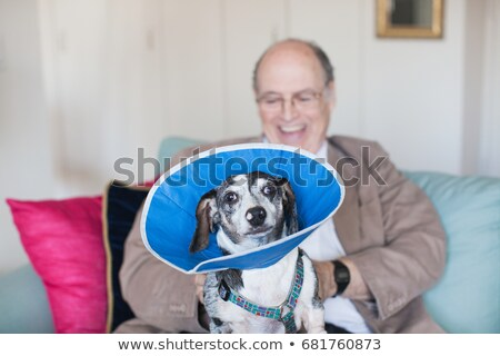 Senior man sitting on a sofa with dog in blue collar Stock photo © IS2