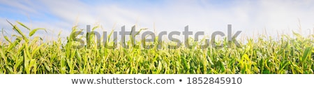 Grass growing outdoors against abstract blue background Stock photo © wavebreak_media