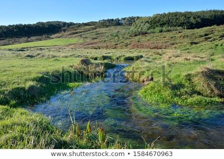 kicsi · folyó · olvad · víz · hegy · domboldal - stock fotó © Mps197