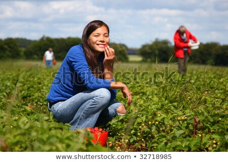 girl collects fresh strawberries on the field Stock photo © g215
