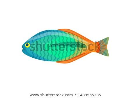 Rainbowfish aquarium fish isolated on white icon Stock photo © robuart