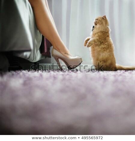 ayakkabı · beyaz · kırmızı · halı · moda · dizayn - stok fotoğraf © ruslanshramko