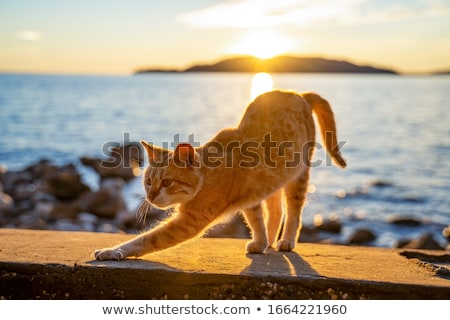 A cat on summer holiday Stock photo © colematt