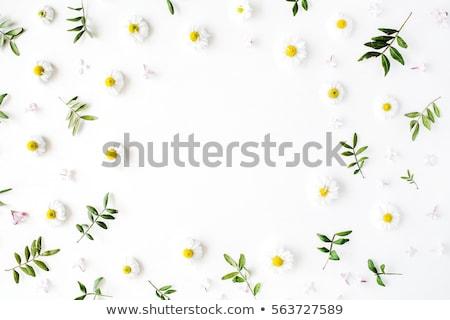 сирень цветы белый весны дизайна лист Сток-фото © Kotenko