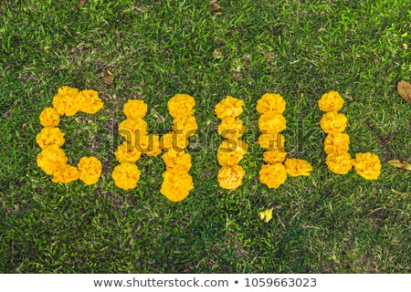 Stock photo: Inscription chill on the grass. Yellow flowers