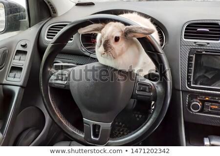 Tavşan araba örnek arka plan sanat tavşan Stok fotoğraf © colematt