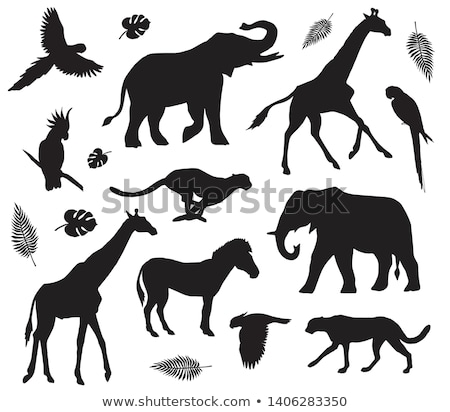 Lion Animal Silhouette Stock photo © Krisdog