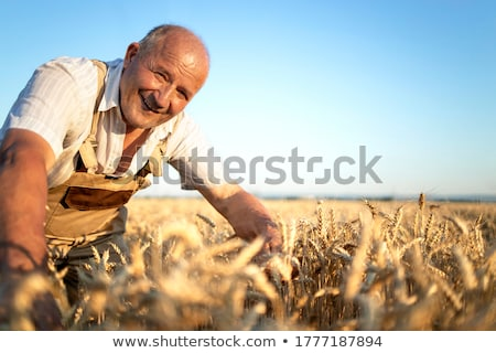 Landwirt Weizenfeld Ernte Sommer lächelnd Landwirtschaft Stock foto © HighwayStarz