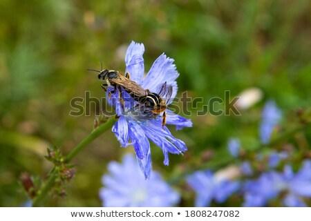 Kettő darázs eszik méz makró kilátás Stock fotó © Mikko