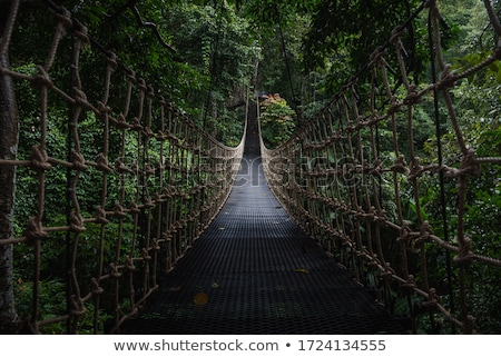 rope walkway in forest stock photo © witthaya