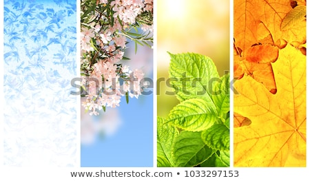 異なる 花 花 春 中心 デザイン ストックフォト © haiderazim
