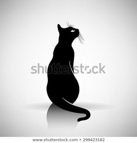 Undomesticated cat Stock photo © elwynn