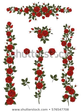 Stok fotoğraf: Red Rose Border