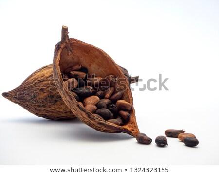 kakao · bitki · meyve · gıda · orman · meyve - stok fotoğraf © bertl123
