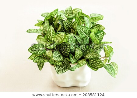 close up artificial green leaf bush in white ceramic vase  stock photo © yanukit