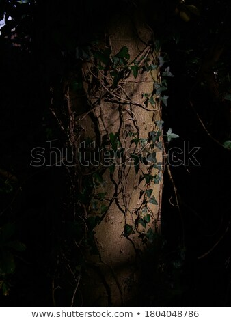 Vertical panorama of tree trunk entwined with ivy Stock photo © alekleks