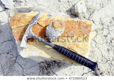 amonite mineral background Stock photo © jonnysek
