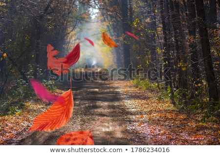 Trail Passing through Forest  Stock photo © ankarb