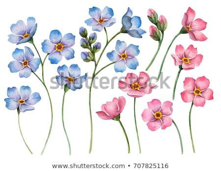 небольшой розовый зеленый луговой цветок Сток-фото © pixachi