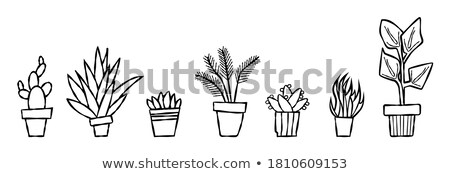 Vector illustration of isolated cactus on white background. Wild west or cowboy theme icon Stock photo © mcherevan
