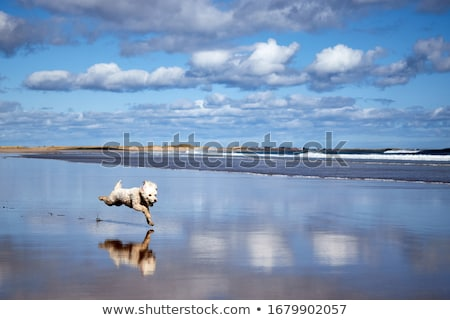 view from the beach to the bamburgh castle stock photo © capturelight