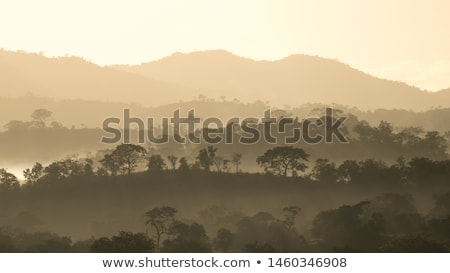 Early morning sunrise in Majete National Park, Malawi Stock photo © davemontreuil