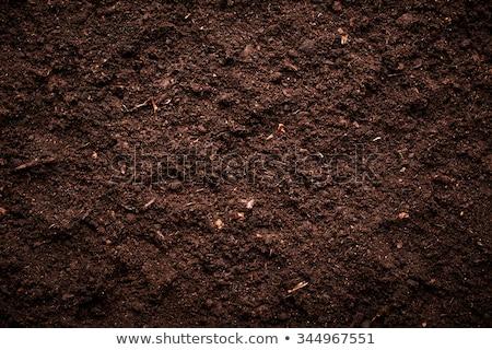 Solo textura preto natureza jardim padrão Foto stock © -Baks-