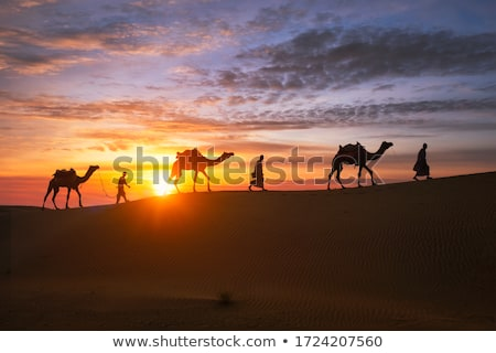 bedouin with camel in the desert stock photo © adrenalina